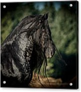Star Stallion Acrylic Print