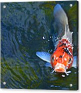Stare Down With A Koi Acrylic Print