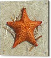 Starfish 1 Of Bottom Harbour Sound Acrylic Print