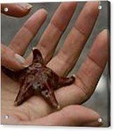 Starfish 1 Acrylic Print
