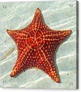 Starfish 3 Of Bottom Harbour Sound Acrylic Print