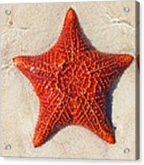 Starfish 4 Of Bottom Harbour Sound Acrylic Print