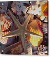 Starfish And Sun Rays Acrylic Print