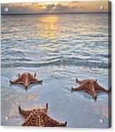 Starfish Beach Sunset Acrylic Print