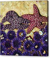 Starfish Dance Acrylic Print