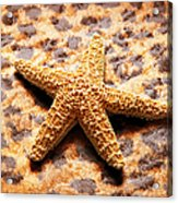Starfish Enterprise Acrylic Print by Andee Design