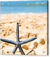 Starfish On Algarve Beach Portugal Acrylic Print