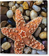 Starfish On Rocks Acrylic Print