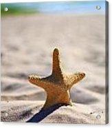 Starfish On The Beach Acrylic Print
