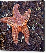 Starfish - Oregon Coastline Acrylic Print