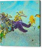Starfish Paradise Acrylic Print