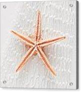 Starfish Acrylic Print by Tom Gowanlock