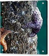 Starfish Under The Pier Acrylic Print