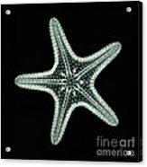Starfish X-ray Acrylic Print