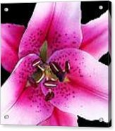 Stargazer Lily By Sharon Cummings Acrylic Print by William Patrick