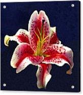 Stargazer Lily Acrylic Print