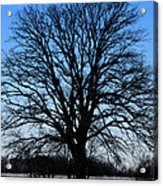 Stark Tree Acrylic Print
