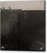 Starlings Acrylic Print