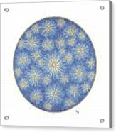 Starlit Sky Acrylic Print
