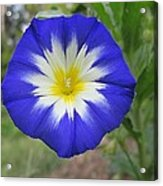 Starry Blue Enchantment Acrylic Print