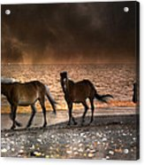 Starry Night Beach Horses Acrylic Print
