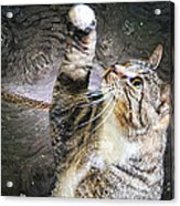 Starry Night Kitty Style - Featured  In Comfortable Art Group Acrylic Print