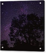 Starry Sky With Silhouetted Oak Tree Acrylic Print