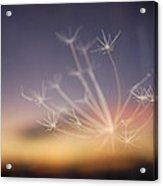 Stars At Night Acrylic Print