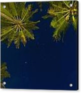 Stars At Night With Palm Tree Thalpe Acrylic Print