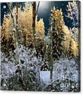 Starshine On A Snowy Wood Acrylic Print
