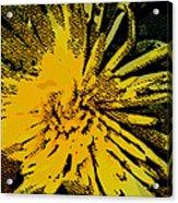 Starstruck Acrylic Print