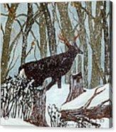 Startled Buck - White Tail Deer Acrylic Print