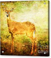 Startled Acrylic Print