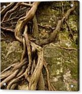 State Park Roots Acrylic Print