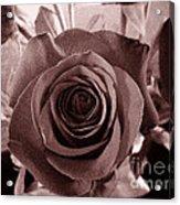Static Rose Acrylic Print