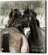 Staying Together Acrylic Print