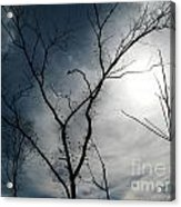 Steal Trees Acrylic Print
