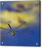 Stealth Chopper Acrylic Print