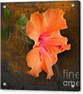 Steely Hibiscus Acrylic Print by The Stone Age