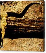 Steer Mount Acrylic Print