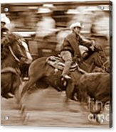Steer Roping Acrylic Print by Bill Keiran