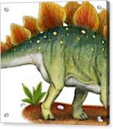 Stegosaurus Acrylic Print