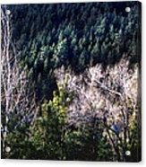 Steller's Jay Near Greyrock Mountain Colorado Acrylic Print by Ric Soulen