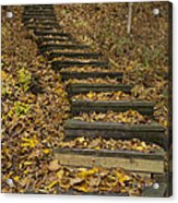 Step Trail In Woods 11 Acrylic Print