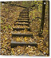 Step Trail In Woods 14 Acrylic Print