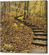 Step Trail In Woods 16 Acrylic Print