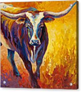 Stepping Out - Longhorn Acrylic Print