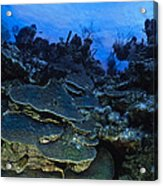 Steps Of The Sea Acrylic Print