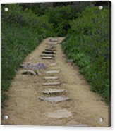 Steps Through Nature Acrylic Print