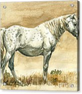 Sterling Wild Stallion Of Sand Wash Basin Acrylic Print by Linda L Martin